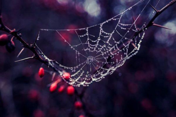 Spinneweb in je tuin